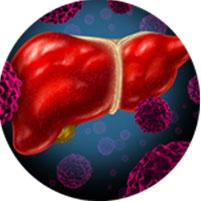Liver & Kidney Problems