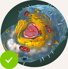 Ensure Healthy Cellular Function