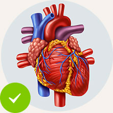 Helps Support the Heart