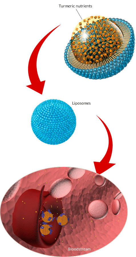 PuraThrive micelles liposomes