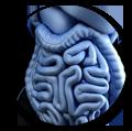 probiotic healthy gut biome