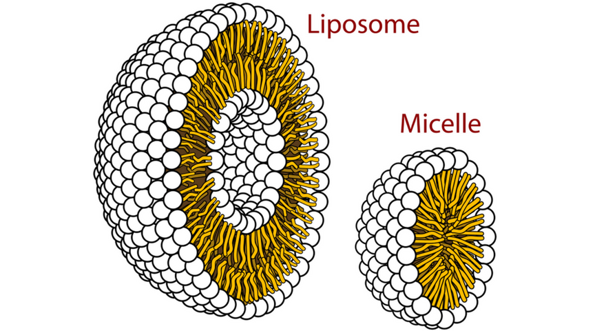 micelle liposomal delivery