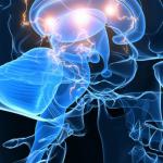 Probiotics and the Brain