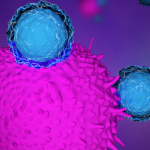 Innate and Adaptive Immune Responses – How Your Immune System Actually Works