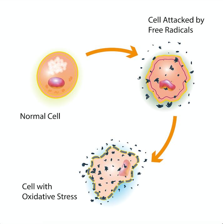 Antioxidants and oxidative stress